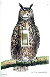 Martinet Le Duc Owl