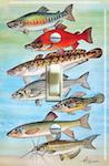 Mudminnows - Alaska Blackfish, European Whitefish, Salmon, Dog Salmon - 1973