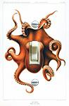 Octopus Cephalopod 1915