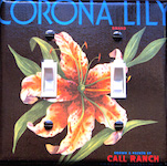 Corona Lily Brand