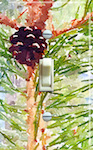 Pinecone with Branch