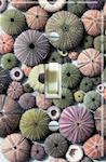 Sea Jewels (Sea Urchin)