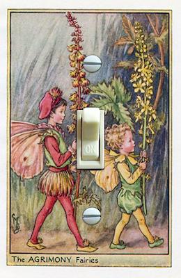 Agrimony Fairies