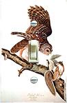 Audubon Barred Owl and Squirrel