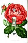 Red Rose 1878 Paul Neron