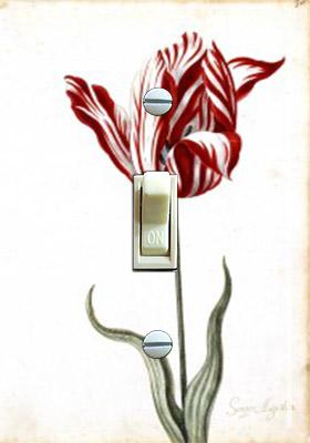 Tulip 17th Century